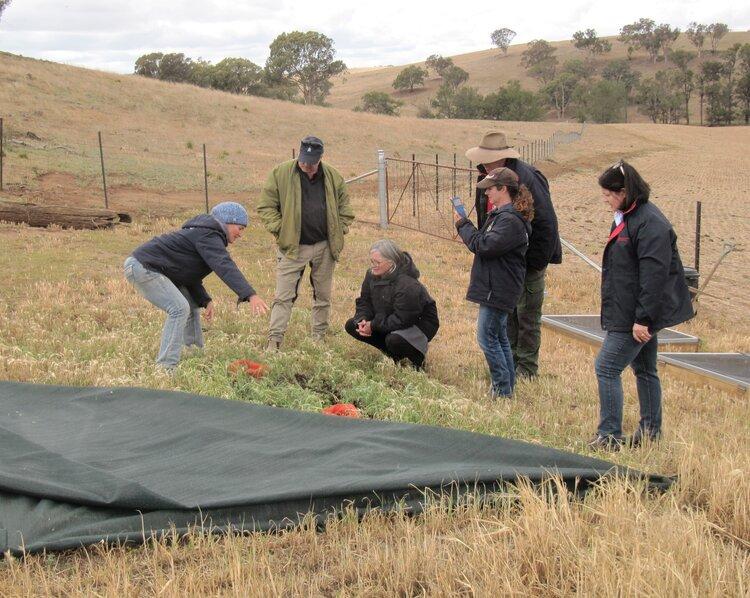 Sally Kirby shows the dung beetle arena at a Central Tablelands Landcare event at Molong, NSW