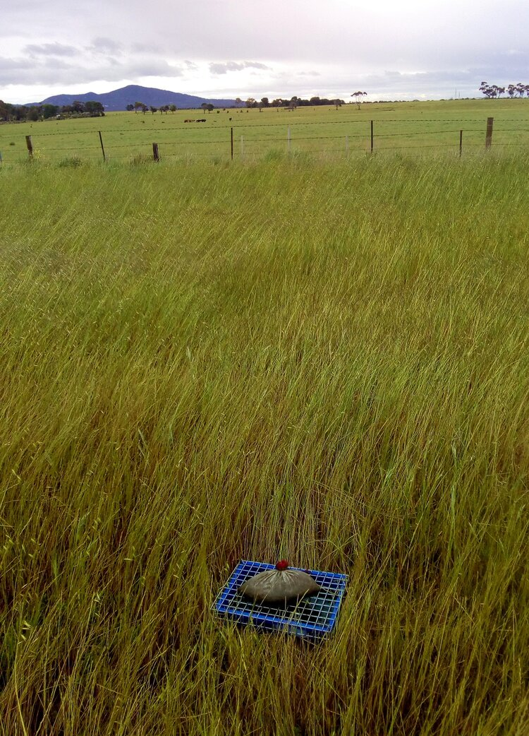 Trap in green pasture near the You Yangs, Victoria